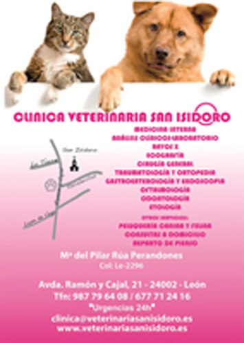 Clinicas Veterinarias Leon SAN ISIDORO