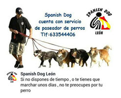 Paseadores Caninos Le�n Spanish Dog