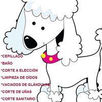 Peluquerias Mascotas Granada Zoe