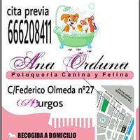 Peluquería mascotas Burgos Ana Orduna