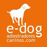 Adiestradores Alicante E-dog