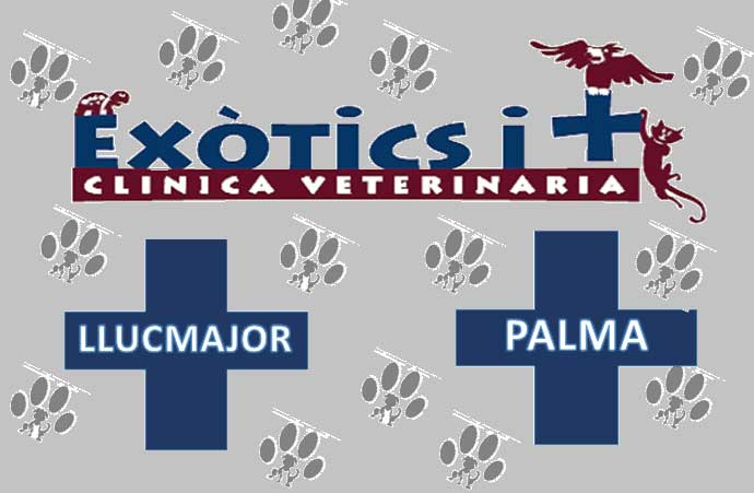 Clinicas Veterinarias en Palma de Mallorca Exòtics i +