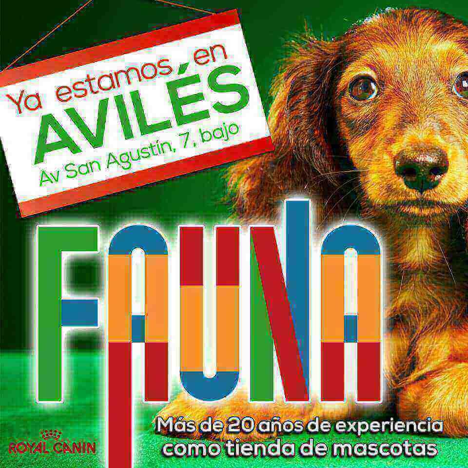 Clínicas veterinarias Aviles Fauna