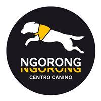 Adiestradores Mascotas Alicante Ngorong