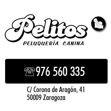Peluquerias Mascotas Zaragoza Pelitos