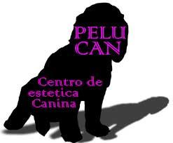 Peluquerias Mascotas Zaragoza Pelu Can
