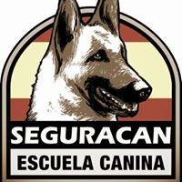 Adiestrador Canino Alicante SeguraCan
