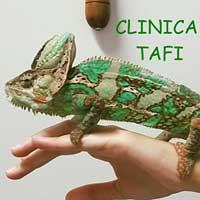 Clinicas Veterinarias Vigo Tafí