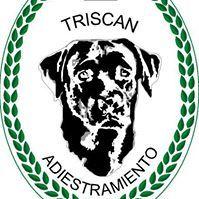 Triscán