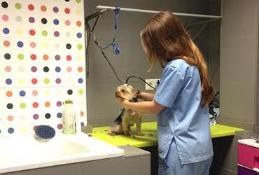 Instalaciones Peluqueria Canina